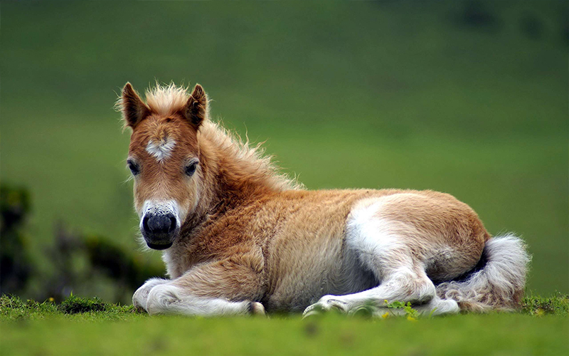 کره اسب